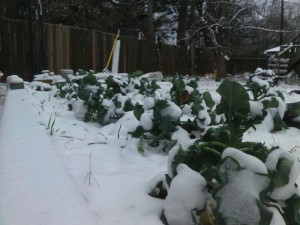 snow on broccoli 1